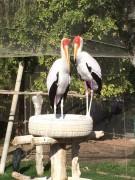 Sortie zoo Al Ain CE1 (38)