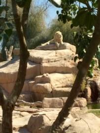 zoo 6èmes 11