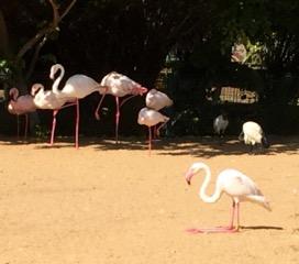 zoo 6èmes 8