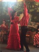 Flamenco (22)